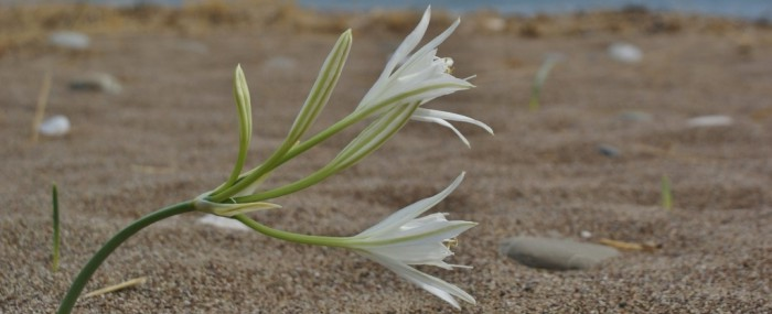 Yoga on Kythera May and October 2014