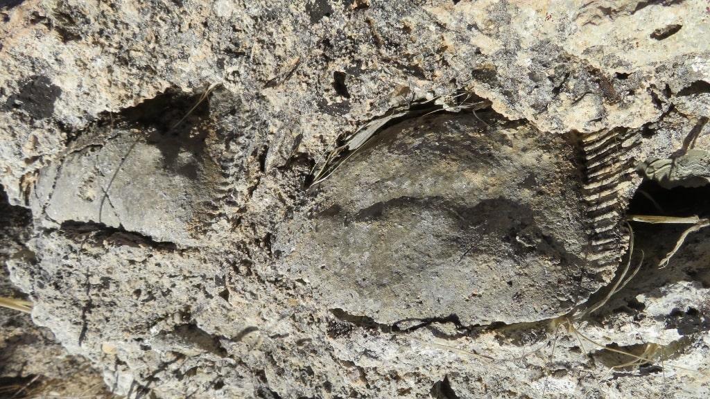 Fossils on Kythera by Xenonas Fos ke Choros (3)