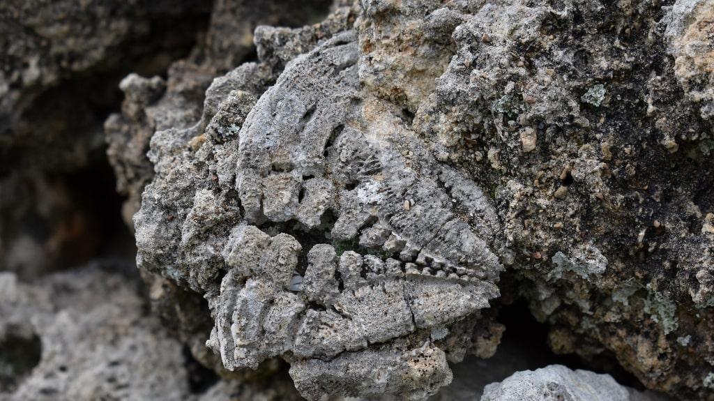 Fossils on Kythera by Xenonas Fos ke Choros (7)