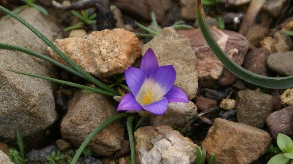 Wild Flowers of Kythera by Xenonas Fos ke Choros (9)