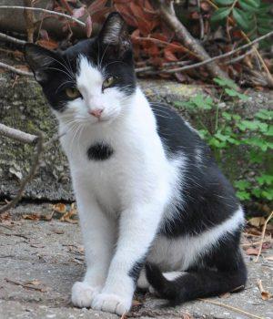 Visit your cat (13)