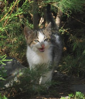 Visit your cat on Kythera (5)
