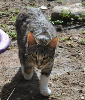 Visit your cat on Kythera (7)