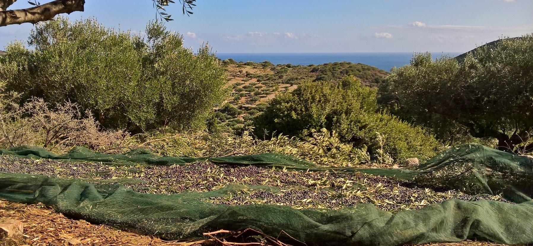 Olive slider