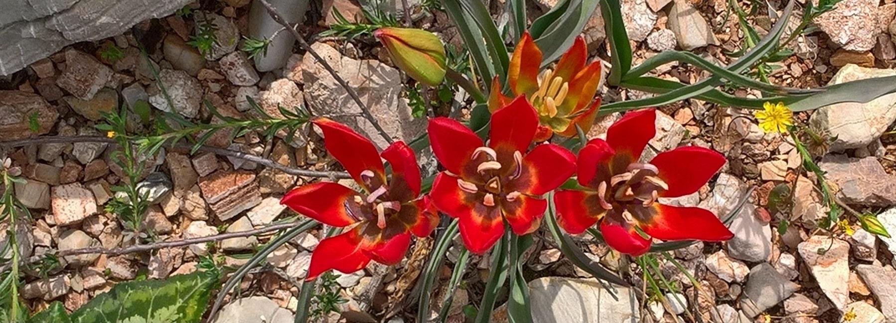 Home - Xenonas Fos ke Choros - Kythera tulip