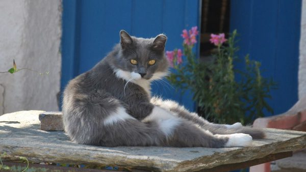 Visit your cat on Kythera (2)